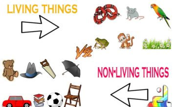 Difference Between Living and Non Living Things