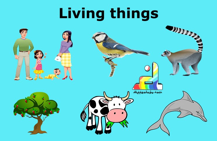 Image result for living things