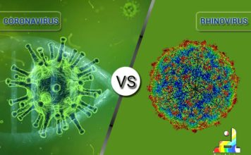 Difference between Coronavirus and Rhinovirus